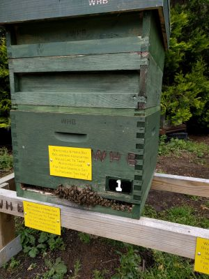 Bee Hive donated by the club